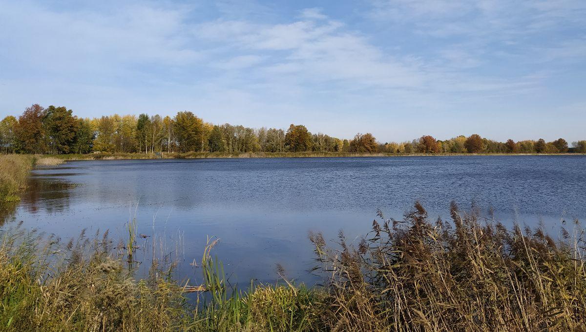 Hímfai tó